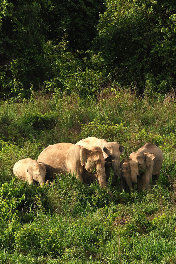 ช้างกุยบุรี